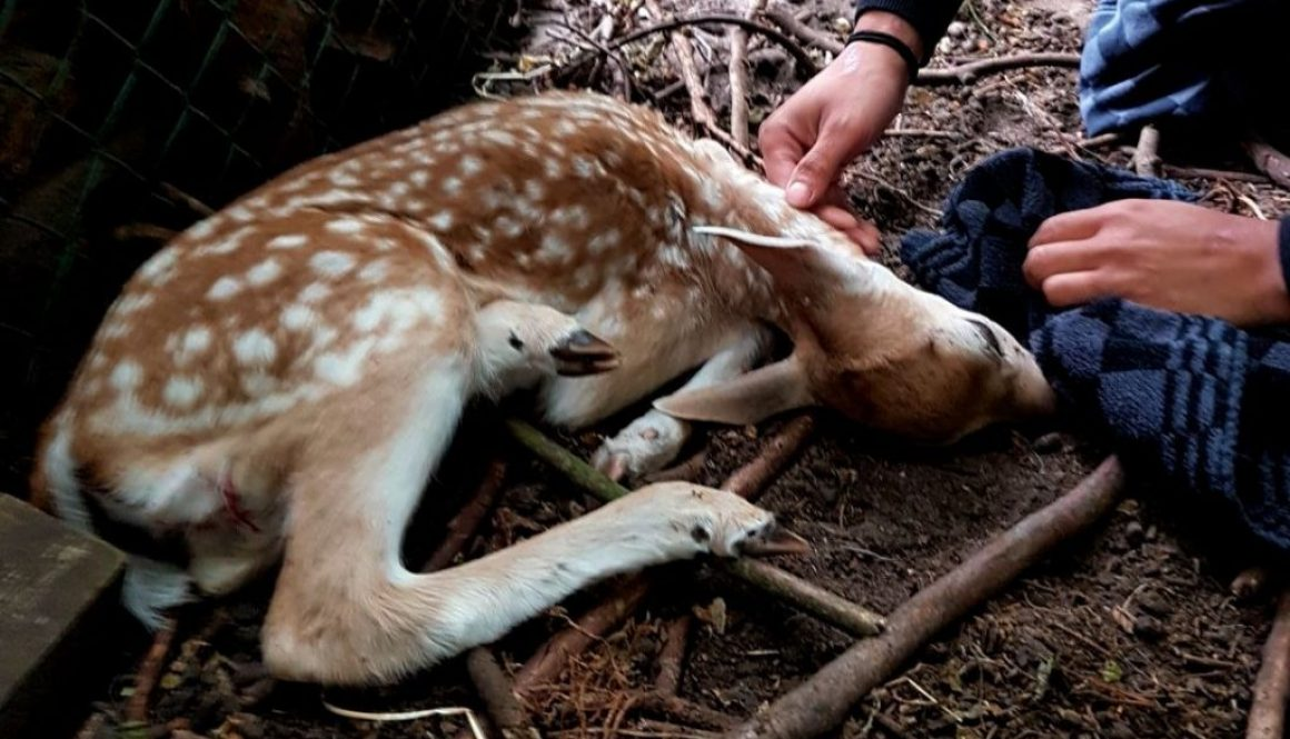 Bambi met breuk 1100x700