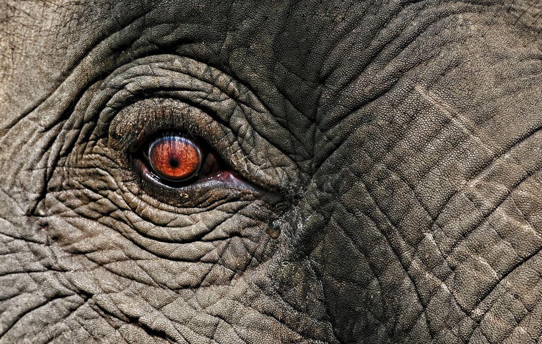Elephant Unsplash 1100x700