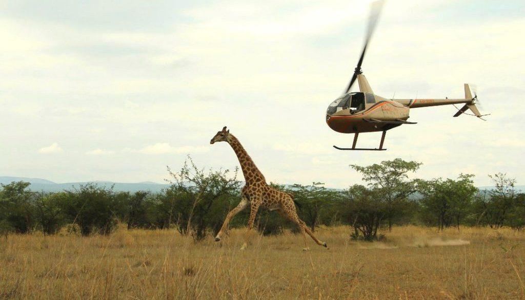 Helicopter Giraffe 1100x700
