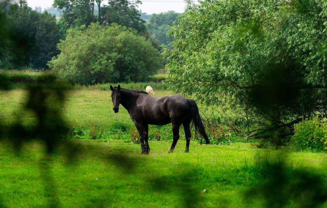 Uw ontsnapt paard even in slaap schieten?