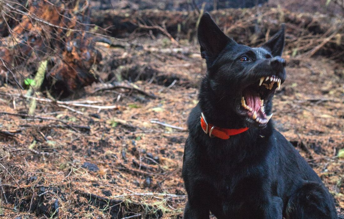 Hond agressief verdoven