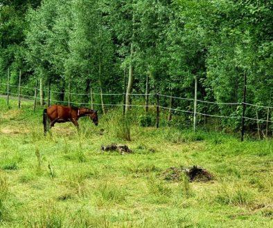 Paard verdoven