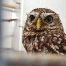 Eerstelijns diagnostiek en behandeling voor vogels.
